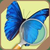 Automatic Butterfly Identifier