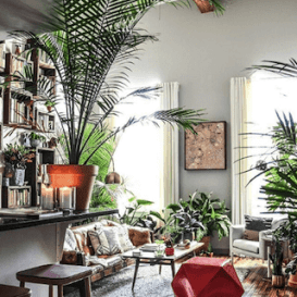"Cuenta de Apartment Therapy Instagram que muestra una sala de estar inspirada en plantas"" srcset = ""//cdn2.hubspot.net/hub/53/hubfs/apartment-therapy-plant-living-room.png ? t = 1527221885826 & width = 137 & name = apartment-therapy-plant-living-room.png 137w, //cdn2.hubspot.net/hub/53/hubfs/apartment-therapy-plant-living-room.png?t= 1527221885826 & width = 273 & name = apartment-therapy-plant-living-room.png 273w, //cdn2.hubspot.net/hub/53/hubfs/apartment-therapy-plant-living-room.png?t=1527221885826&width=410&name = apartment-therapy-plant-living-room.png 410w, //cdn2.hubspot.net/hub/53/hubfs/apartment-therapy-plant-living-room.png?t=1527221885826&width=546&name=apartment- therapy-plant-living-room.png 546w, https: //cdn2.hubsp ot.net/hub/53/hubfs/apartment-therapy-plant-living-room.png?t=1527221885826&width=683&name=apartment-therapy-plant-living-room.png 683w, //cdn2.hubspot.net /hub/53/hubfs/apartment-therapy-plant-living-room.png?t=1527221885826&width=819&name=apartment-therapy-plant-living-room.png 819w ""sizes ="" (max-width: 273px) 100vw, 273px"