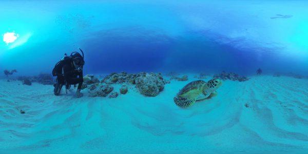 Roam Underwater and Look All Around