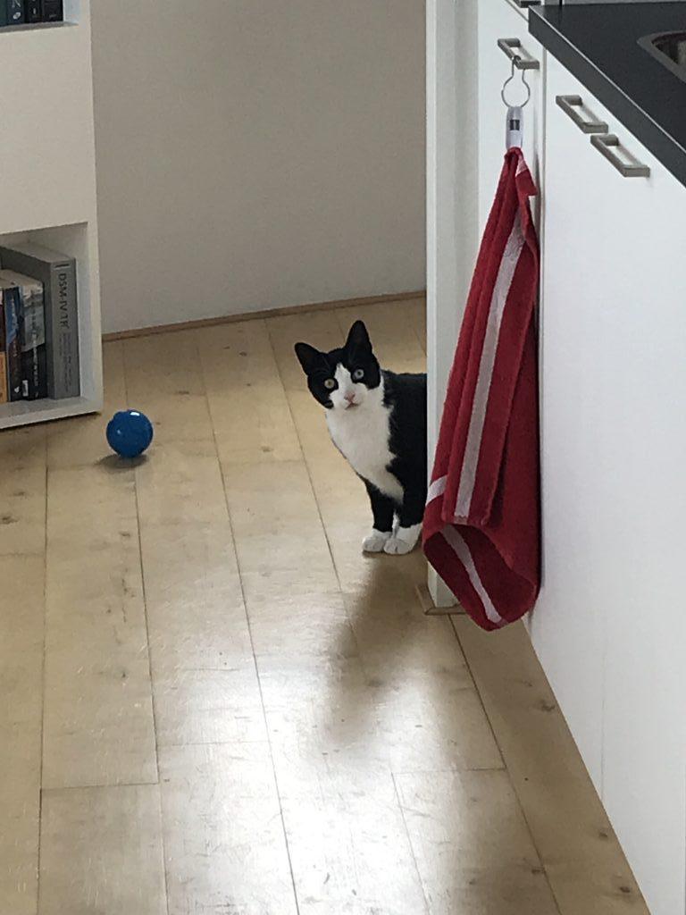 Kat in de war