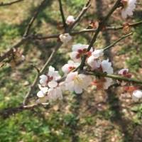 春の太宰府天満宮へ、合格のお礼に行ってきました。