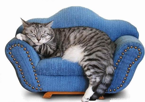 Tv cantiere poesia - Dormire sul divano ...