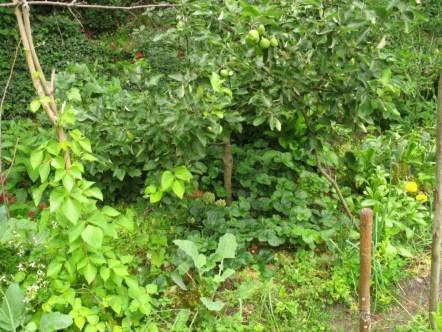 2011 - Biotopgarten im Juni