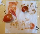 Tomatensorten 3-5