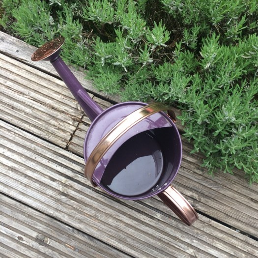 lavendar watering can