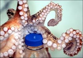 An octopus is opening a bottle of soda