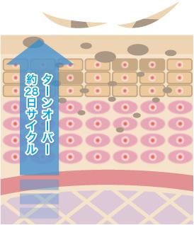 黒ずみケア専用クリーム 薬用ibiza(イビサ)クリーム