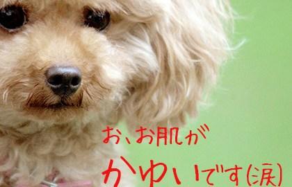 犬専用化粧水「アヴァンス」の効果と口コミ