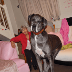 Meet Freddie, the World's Tallest Dog