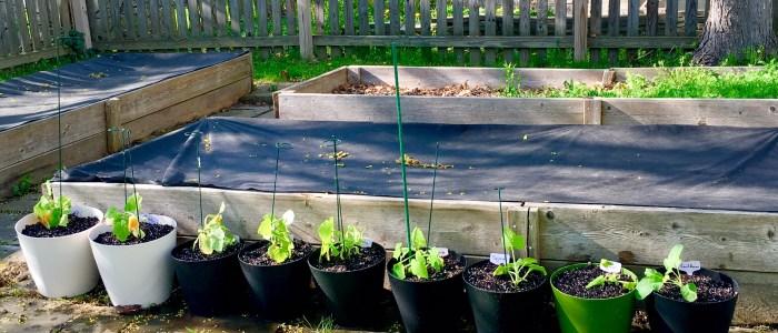 Gardening: Easier than you think!