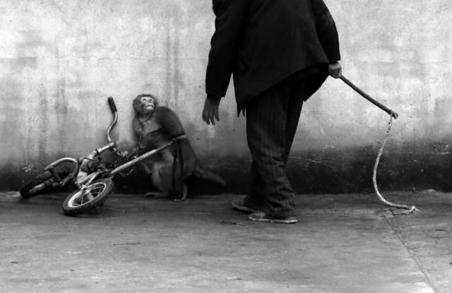Nem a jutalom reményében végzik a trükköket Forrás: Yongzhi Chu (Word Press Photo)