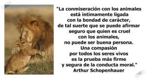 schopenhauer-quien es cruel-con-los-animales-no puede ser buena persona.