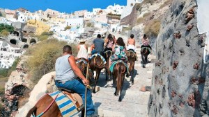 turismo animales
