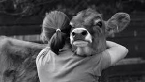 Las ovejas se enamoran para siempre y son fieles toda la vida