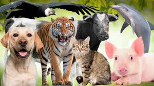 Día Internacional de los Derechos de los Animales 10 de diciembre