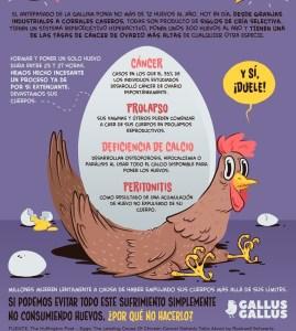 puesta-de-huevos-maltrato