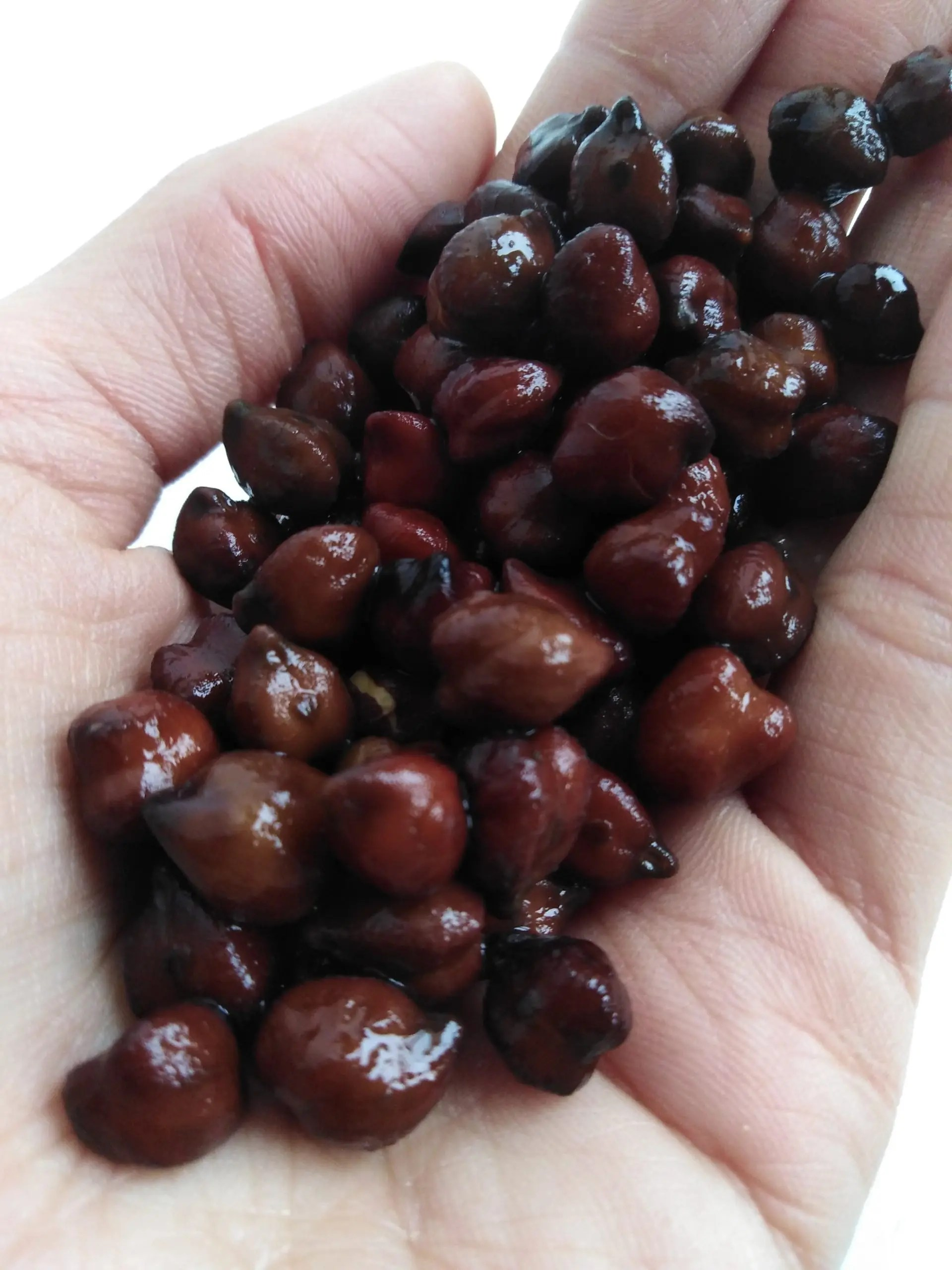 cooked  black chickpeas on a hand
