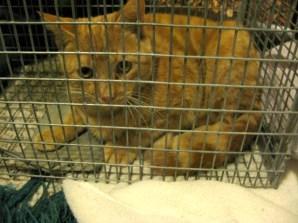 feral cat siblings born summer 2012