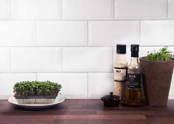 sproutly groddar på en köksbänk