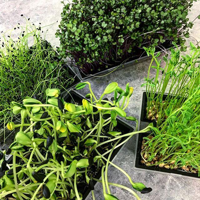 sproutly groddar fyra olika gröna lådor