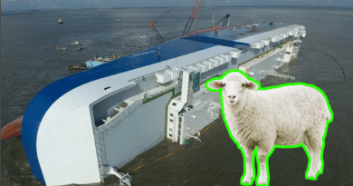 A live export ship capsized with 14,000 sheep onboard