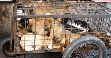 Victory! Indonesian Province Bans Dog Meat