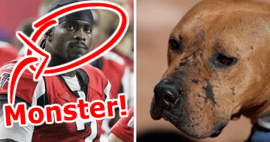 Michael Vick was convicted of dog fighting pit bulls and now the NFL makes him Pro Bowl captain