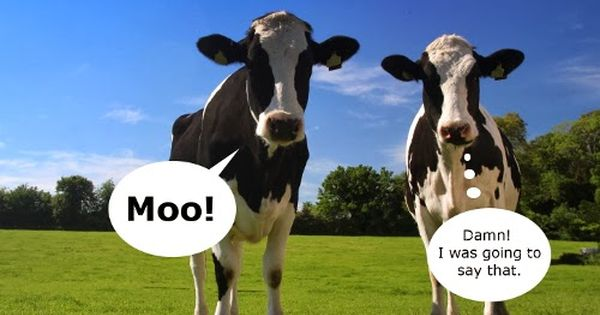 A news study finds that cows talk to each other about their feelings and emotions