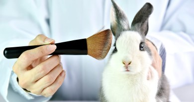 California, Illinois, and Nevada all have laws banning cosmetics tested on animals starting the first day of 2020