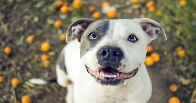 PETA has sent a letter to Ontario's government against pit bulls and in support of breed specific legislation and they're wrong.