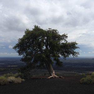Craters of the Moon Idaho Tree   Vegan Nom Noms