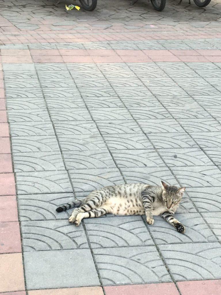 street cat Bangkok