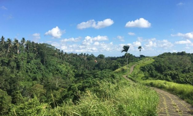 Vegan Bali – What I Ate During A Week in Ubud