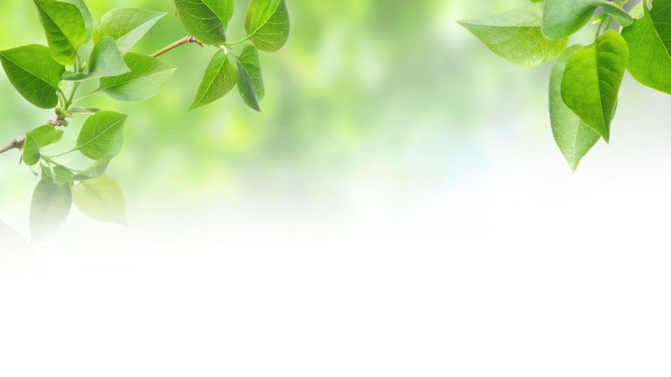green-leaf-leaves-background-textures-wallpaper-10