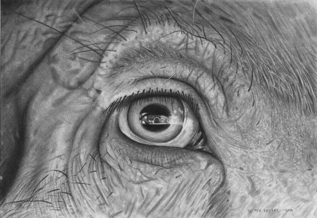 Pig Eye Final 1024×705