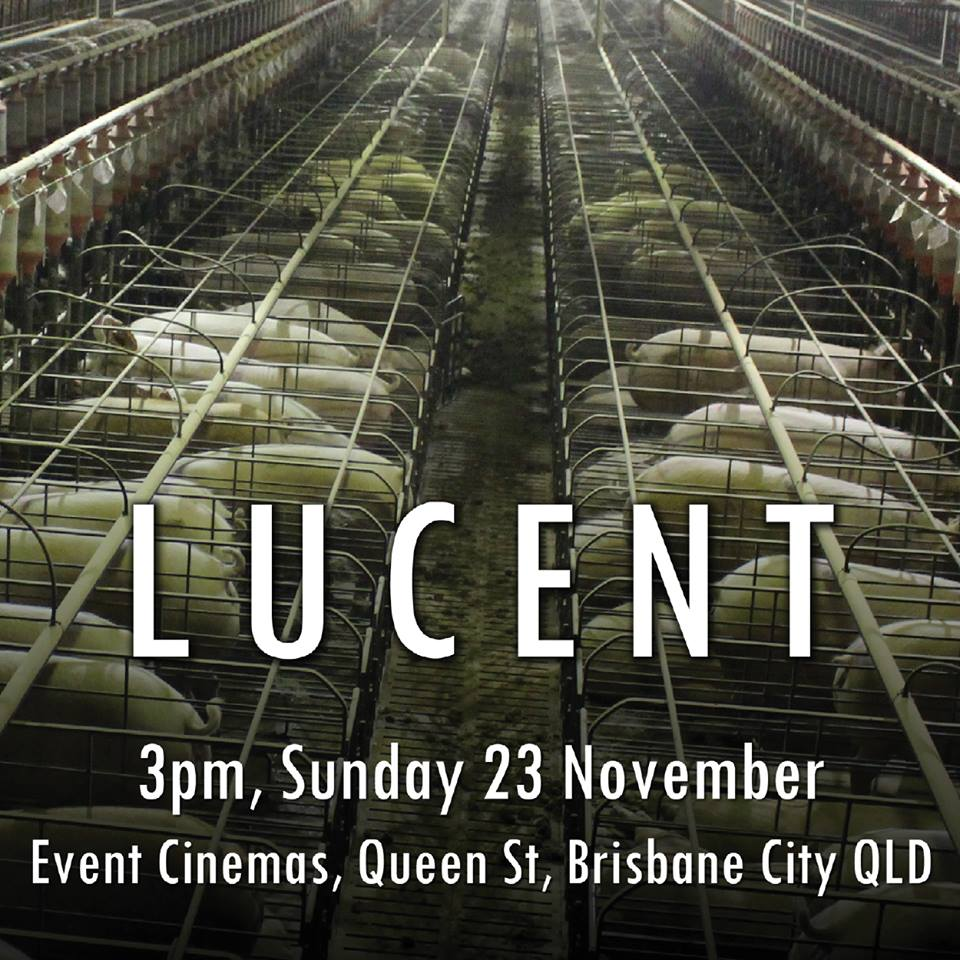 The Truth About The Movie 'Lucent'