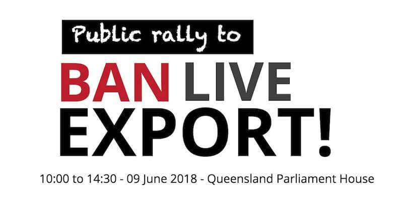 5 Reasons Why Vegans Shouldn't Attend The Ban Live Export Protests.