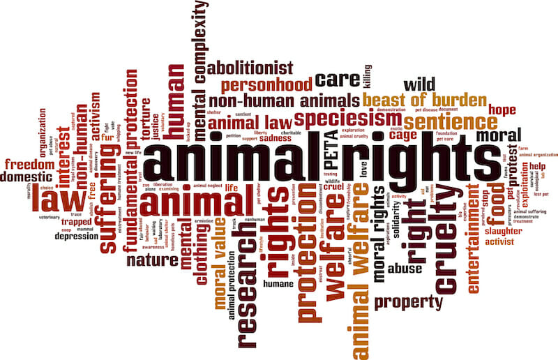 How Is The Animal Justice Party An Animal Rights Party?