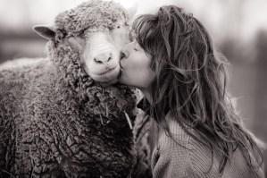 Sheep. Definitely cool