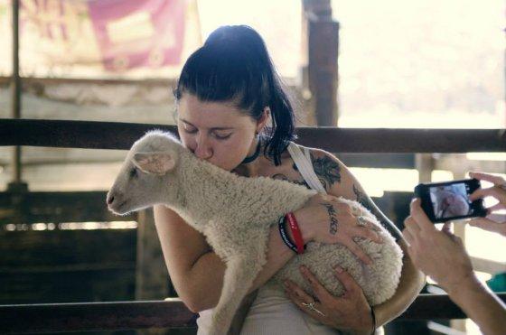 «269» открывает ферму для освобожденных сельскохозяйственных  животных