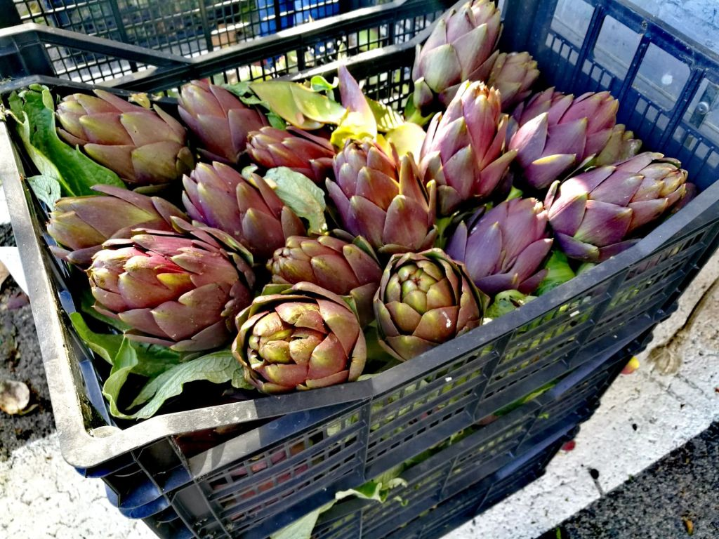 Roman Artichokes at the Market