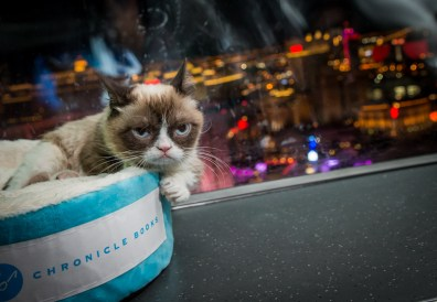 Grumpy Cat Rides The High Roller