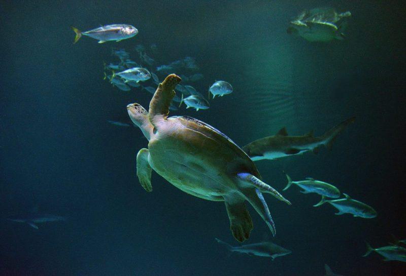 Mandalay Bay Shark Reef Aquarium - Photo Credit Darrin Bush of Las Vegas News Bureau