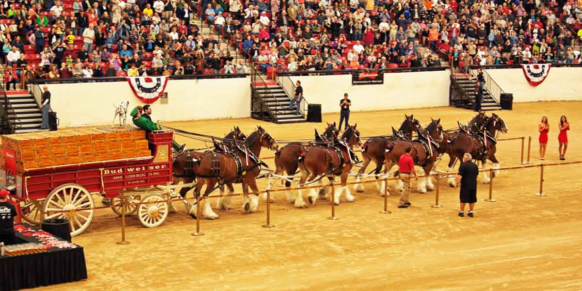 South Point Casino Clydesdales Budweiser featured image