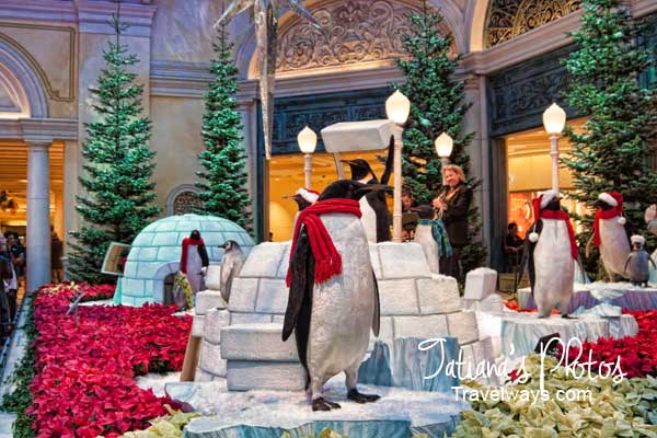 Penguins and Performers at Bellagio