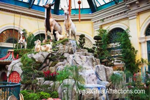 Goats at the Chinese New Year 2015, Bellagio