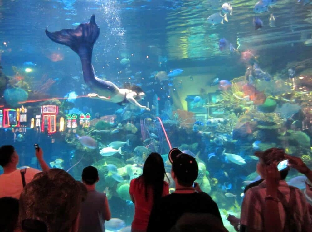 The Aquarium at the Silverton Hotel - Things to do in Las Vegas