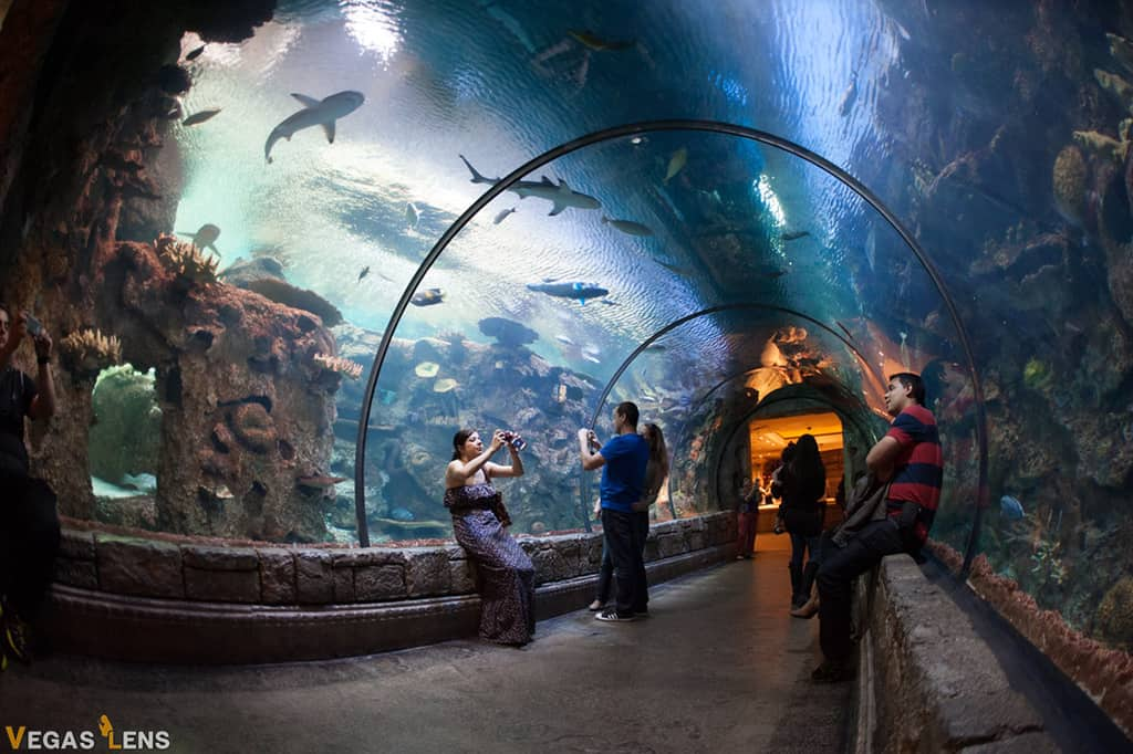 Mandalay Bay Shark Reef - Las Vegas attractions for Couples