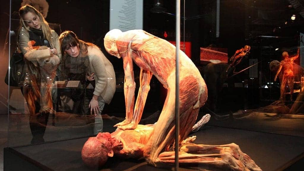 Bodies: The Exhibition - Things to do on Vegas Strip