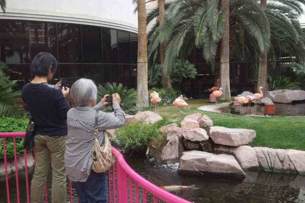 Wildlife Habitat - Things to do on Vegas Strip